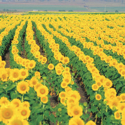 Crop & Plant Growing