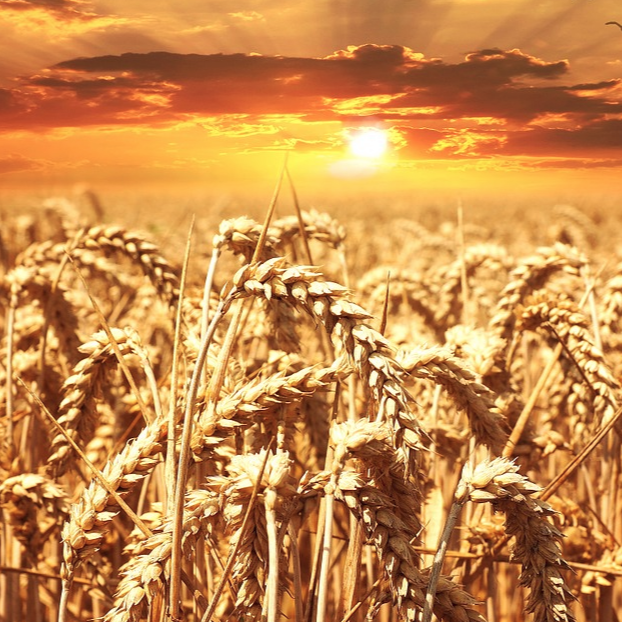 Grain Growing