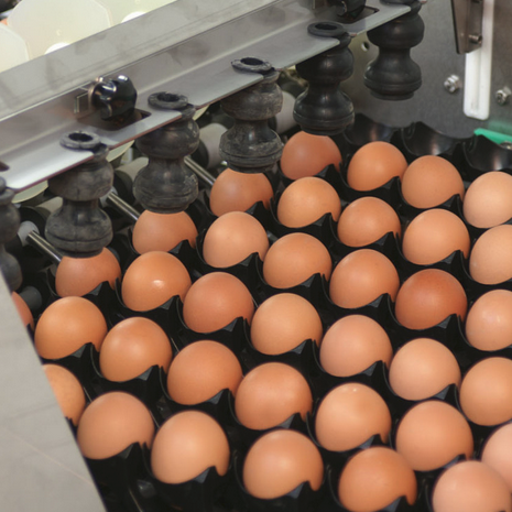 Poultry Farming (eggs and meat)