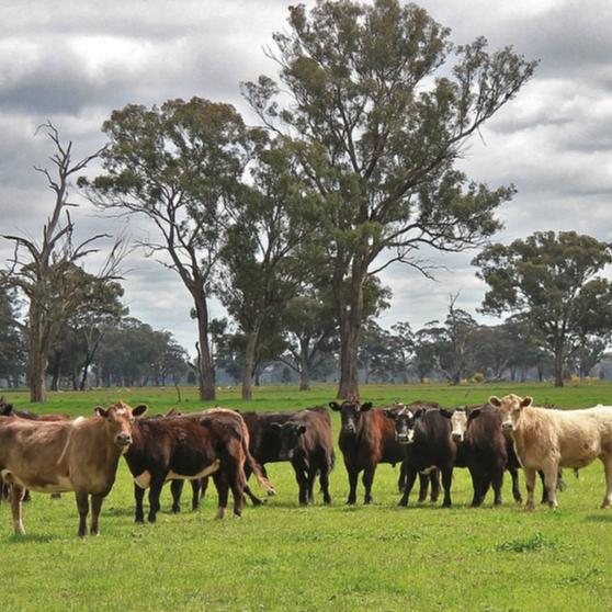 Livestock Farming nec