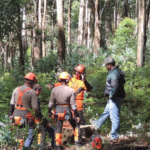Services to Forestry