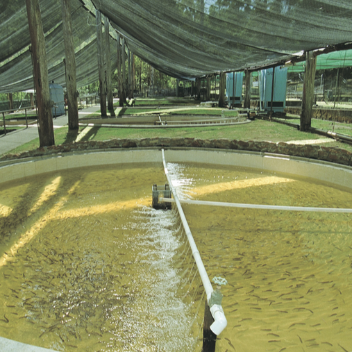 Aquaculture nec