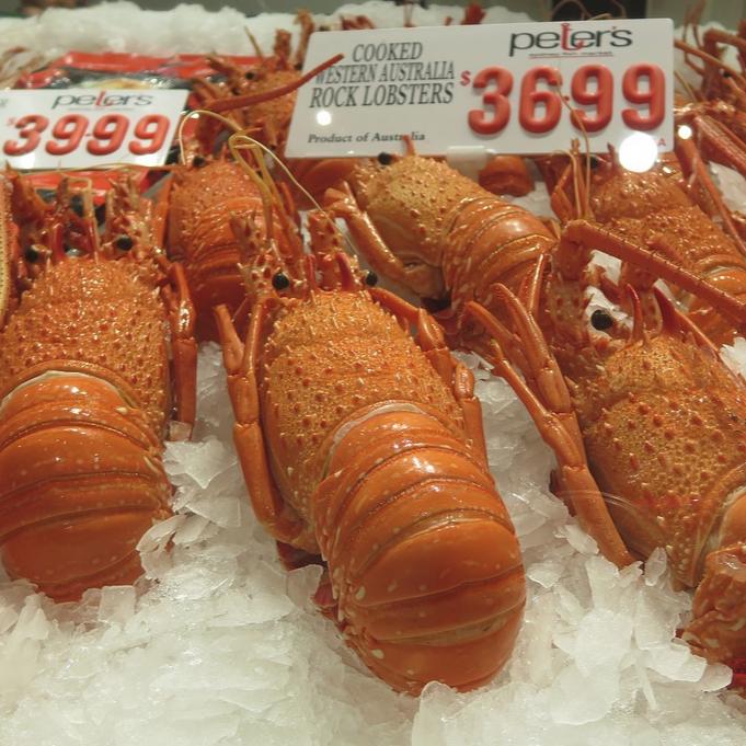 Lobster Farming