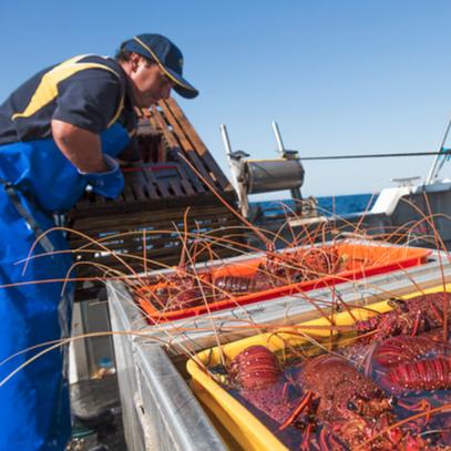 Rock Lobster Fishing