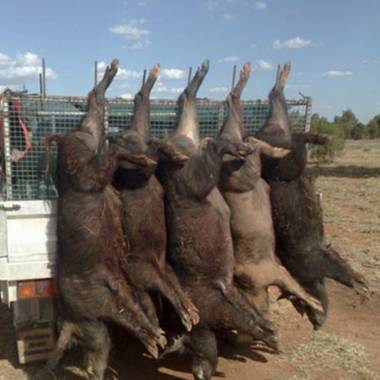Hunting &Trapping